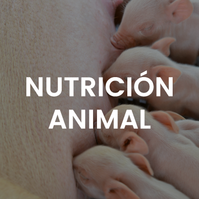 nutricion-animal-big